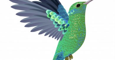 plakat med fugl