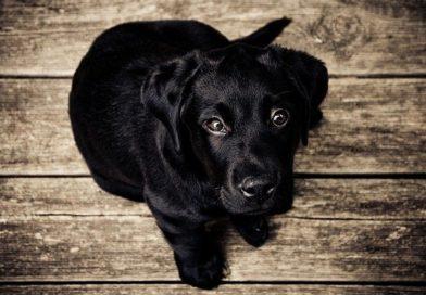 Guide til at vælge den rigtige hundekurv